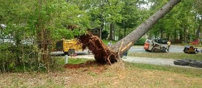 Tree Removal Service Cost, in Pembroke Pines